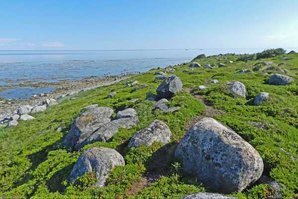 Nur Heidekraut  wächst am kargen Südzipfel der Insel.
