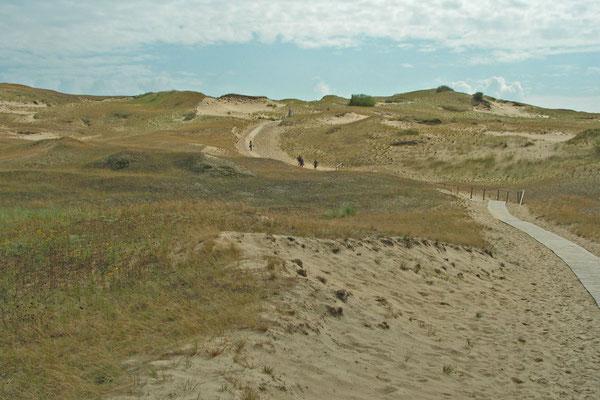 Bohlenwege führen durch die litauische Sahara.