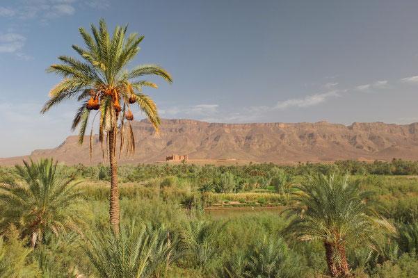 De grootste palmoase van Marokko onderweg naar Zagora