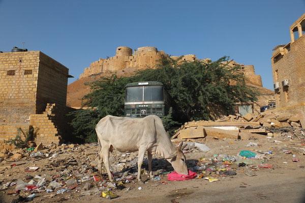 India in één foto: forten, heilige koeien, afval op straat en Tata bussen.