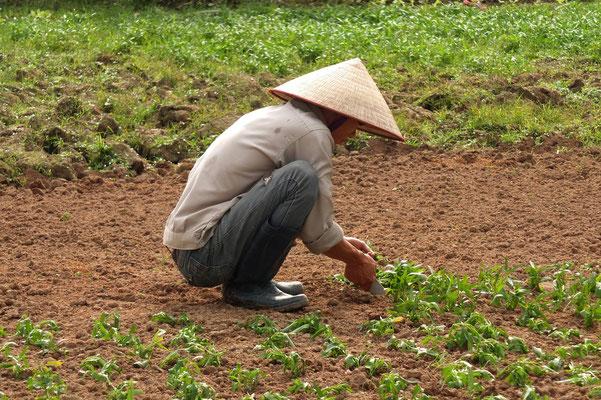 Landarbeider met een nón lá op zijn hoofd.