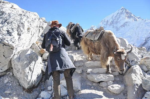Oppassen voor de yaks