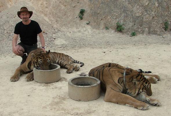 Bij de Tiger Temple