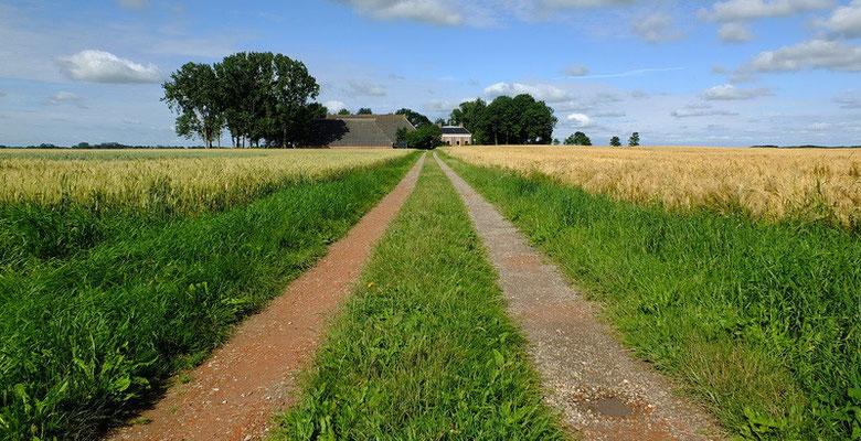 Boerenlaantje nabij Kantens