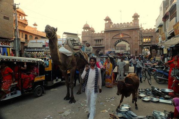 Dromedaris op straat in Bikaner