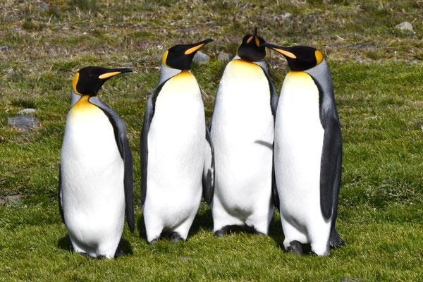John, Paul, George & Ringo
