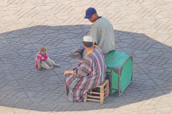 Berberaap op de Jamaa el Fna