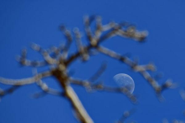 Zie de maan schijnt door de baobab.