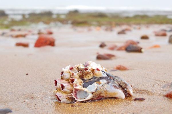 Mossel met zeepokken