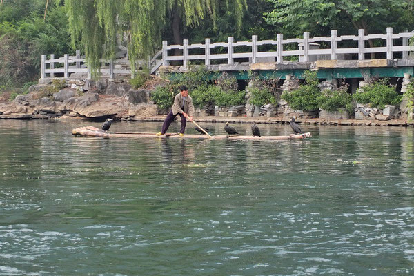 Aalscholvervisser in Yangshuo