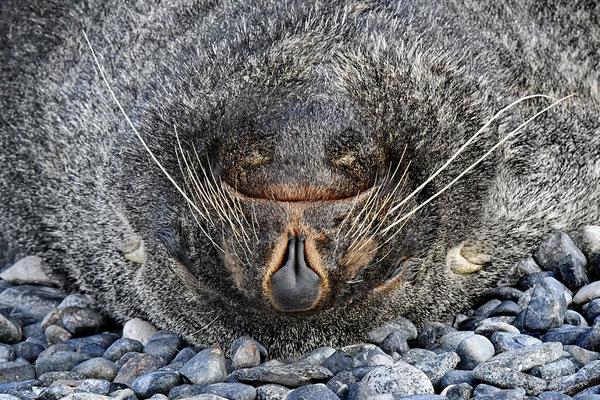 Kuergelenzeebeer