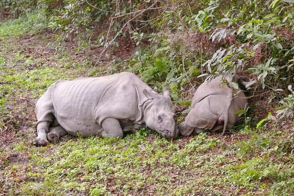 Neushoornmoeder en kind