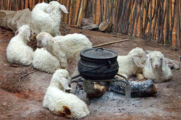 Het voorste geitje had iets te dicht bij het vuur gelegen.