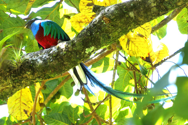 De Quetzal