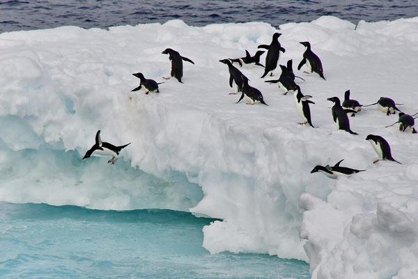 Adélie pinguïns kunnen ook vliegen (heel kort)