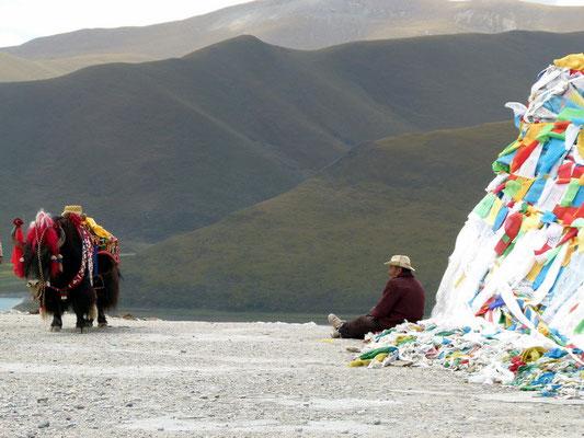 Op de Khamba La pas (4794 m.) kun je je laten fotograferen op een versierde yak.