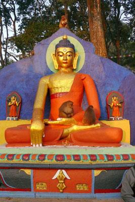 Buddha houdt ook van aapjes