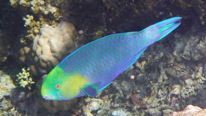 De prachtige onderwaterwereld bij Menjangan