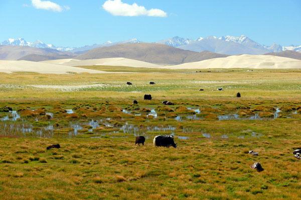 Op 4800 meter hoogte: moeras, woestijn, heuvels en op de achtergrond de machtige Himalaya