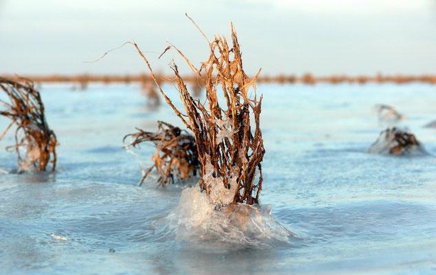 Een restantje zeekraal