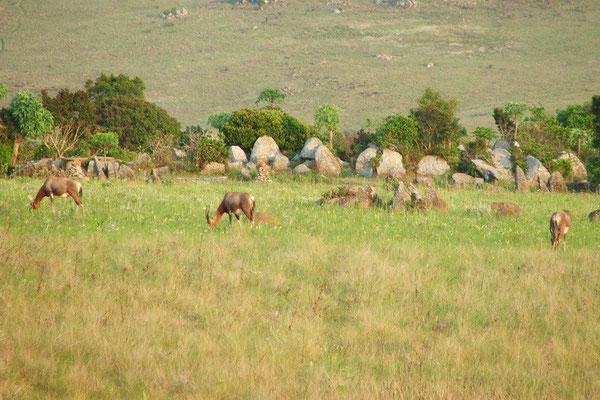 Mbabane N.P in Swaziland, kamperen tussen het wild