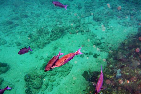 Onderwaterwereld bij Guajimico