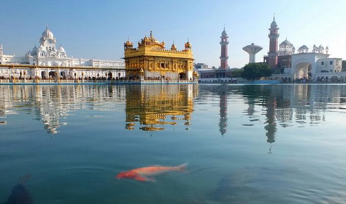De gouden tempel (Harmandir Sahib) in Amritsar
