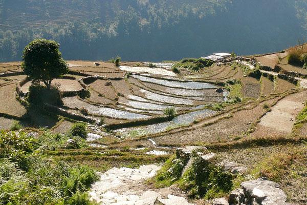Rijstyterrassen