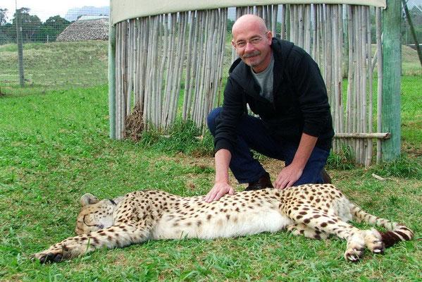 Jachtluipaard (Cheetah)