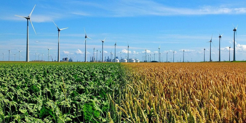 Graan en suikerbieten bij de Eemshaven
