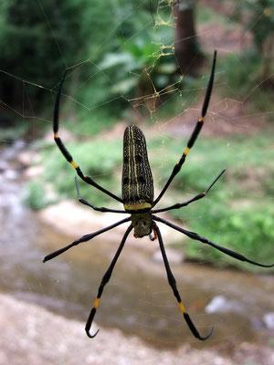 Spin zo groot als een hand