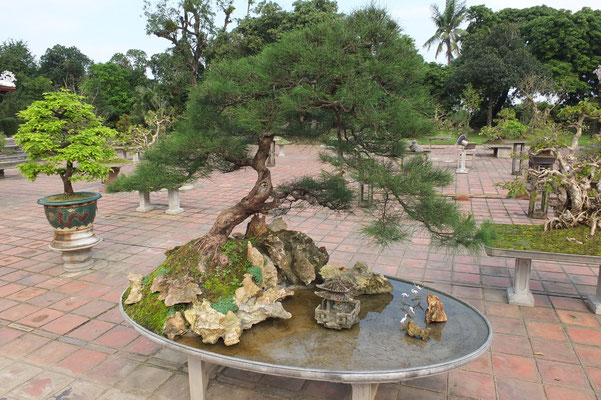Overal in Vietnam zie je bonsai boompjes.