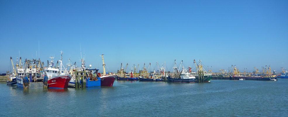 De haven van Lauwersoog