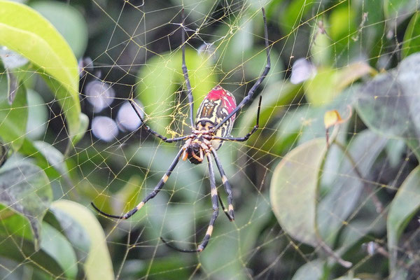 Een spinnetje van zo'n 12 cm. lang