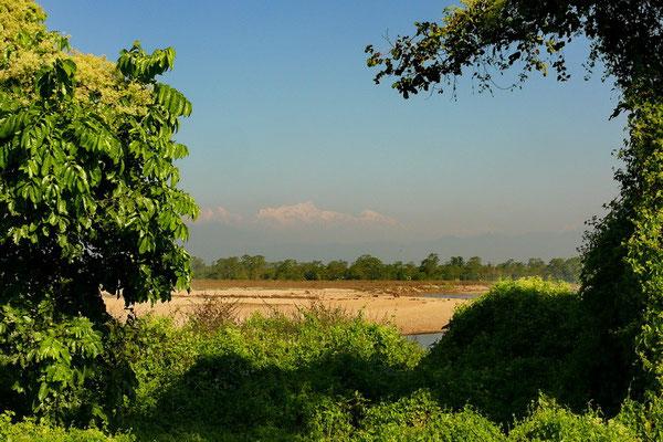 Jungle in Chitwan met Himalaya op de achtergrond