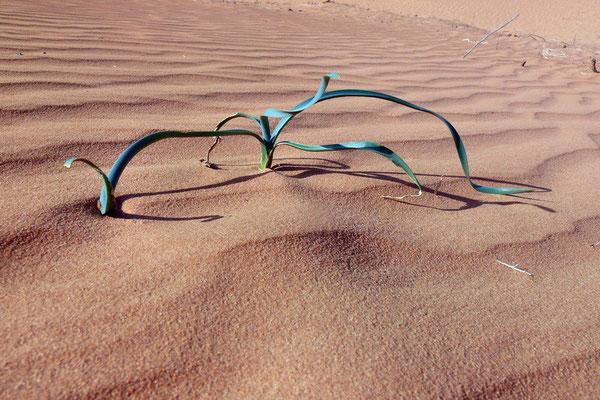 Gras in de woestijn