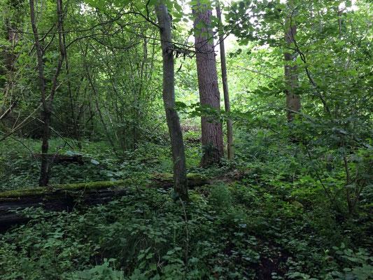 Zone naturelle où l'on peut rencontrer des biches