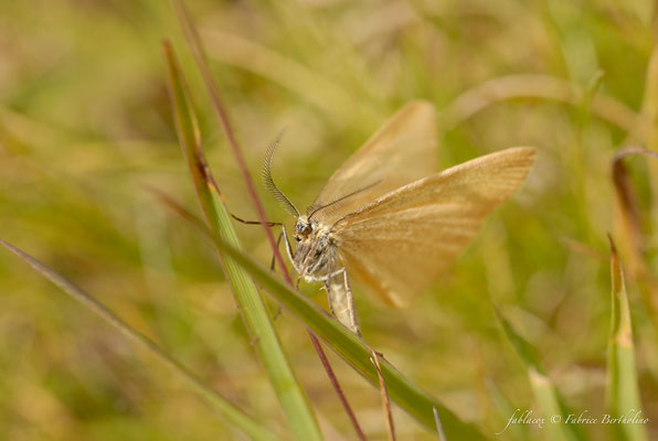 Papillon de nuit (73 Savoie 2006-08)