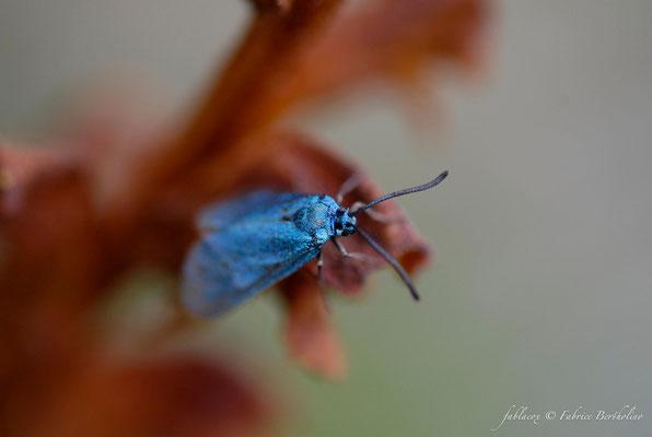 Papillon de jour ? (73 Savoie 2006-08)