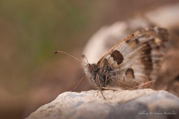 Papillon de jour (37 St Épain 2009-08)