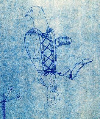 Zeichnung der Brieftauben-Weste