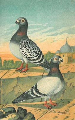 """""""Brüsseler Brieftaube"""" von Jean Bungartz aus """"Der Brieftaubensport"""", 1889."""