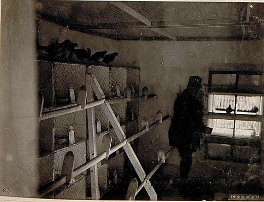 Inneres eines Militärbrieftaubenschlages, September 1917; Bildquelle: gemeinfrei, Austrian National Library, Kriegspressequartier Alben 1914 - 1918, ImageID 15636102