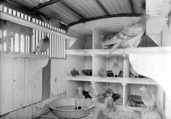 Innenansicht einer Brieftaubenstation/ eines Brieftaubenwagens, ca. 1914-1918; Bildquelle: gemeinfrei, Schweizerisches Bundesarchiv, CH-BAR#E27#1000/721#14095#4817*