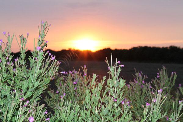 Die Sonnenuntergänge sind ein Traum
