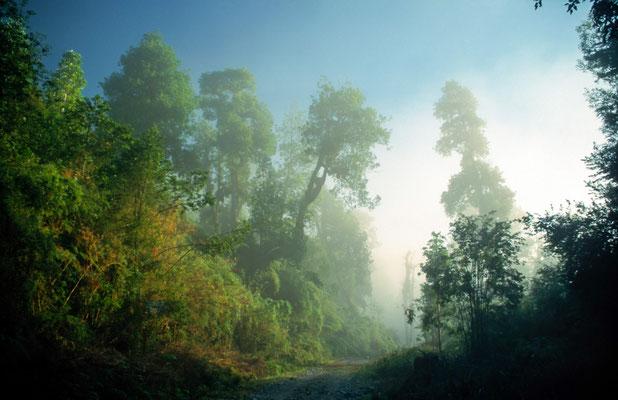 Am Morgen verzieht sich der Morgennebel. Am Vortag wußten wir warum der Regenwald ,Regenwald heißt, es regnete ohne aufhören zu wolllen.