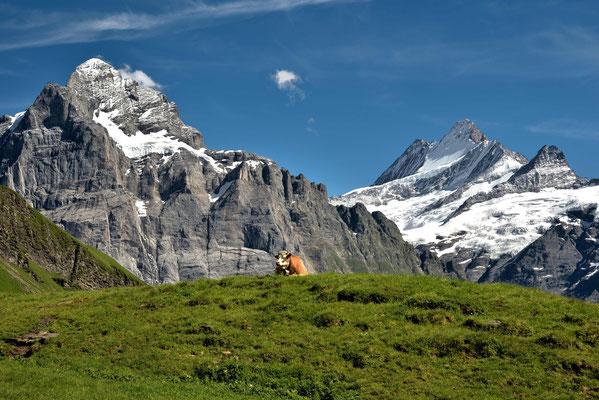 Schweizer Alpenidylle