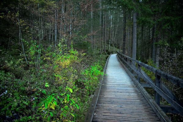 Holzweg in den Wald