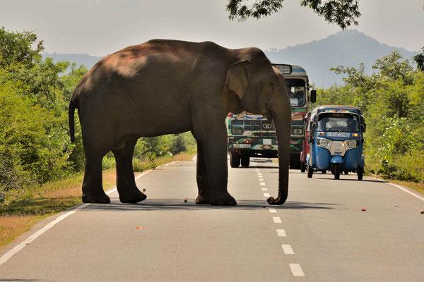 Der Elefant erhebt sein Wegezoll