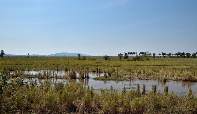 Landschaft bei Battambang